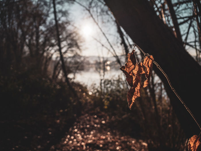 Tree Plant Focus On Foreground Nature Branch Tree Trunk No People Trunk Forest Outdoors Day Leaf Dry Selective Focus Land Plant Part Close-up Autumn Tranquility Sunlight Change Leaves Dried