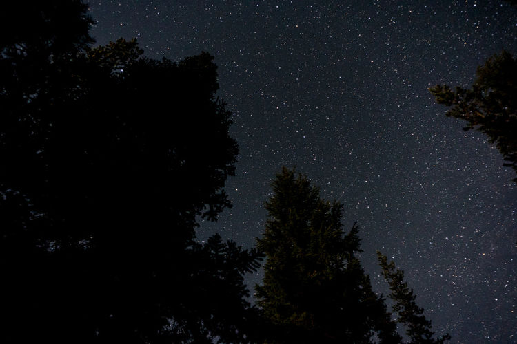 Low angle view of silhouette trees against starry sky