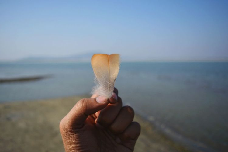 Close-up of hand holding feather at beach against clear sky