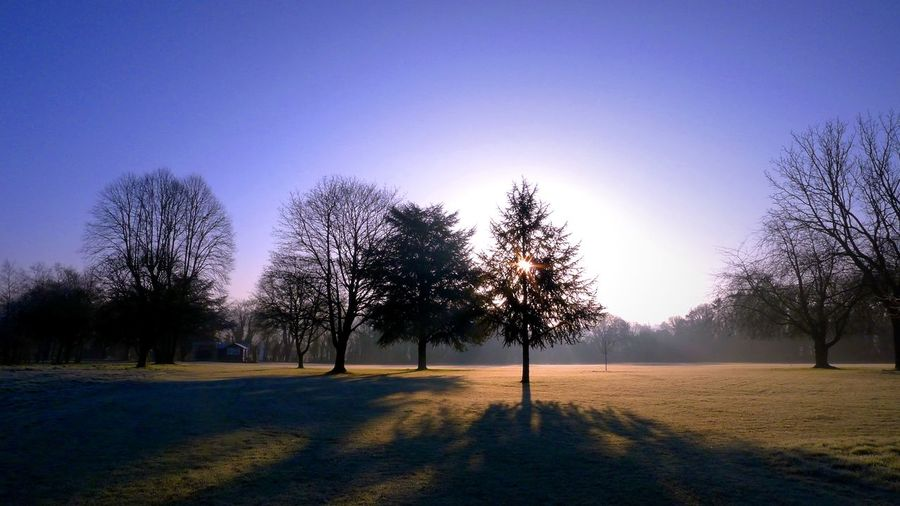 Sun shining through bare trees on field