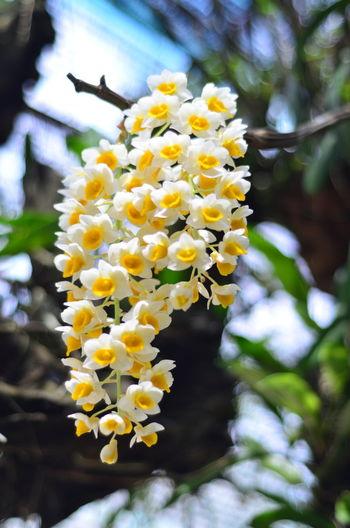 Hoa lan Flowers Flowers,Plants & Garden Đà Lạt, Việt Nam