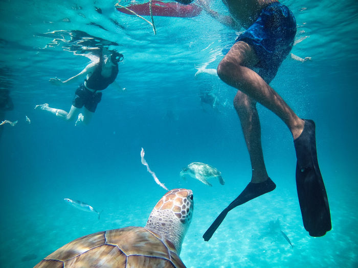 Man and woman swimming by turtle in sea