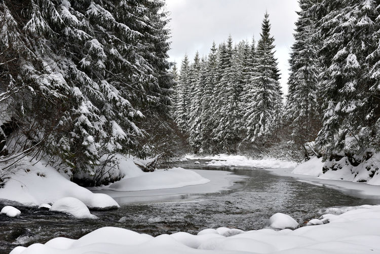 Winter landscape of a small snowy river after blizzard Beauty In Nature Blizzard Cold Temperature Day Fir Forest Ice Landscape Mountain Nature No People Outdoors Pine Tree Pine Woodland Snow Snow ❄ Snowy Snowy Trees Stream Tranquil Scene Tree Water Stream Winter Winter Wood