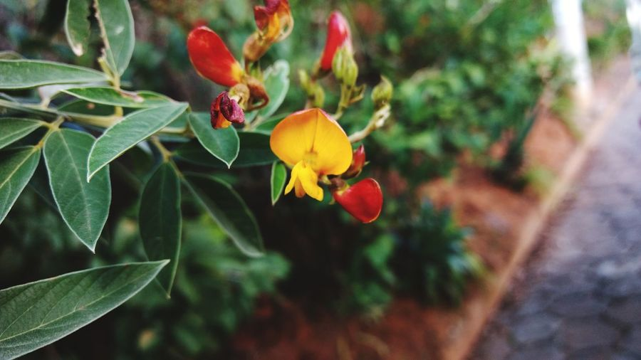 Feijao-andu 3XSPhotographyUnity 3XSPUnity Beauty In Nature Close-up Macro