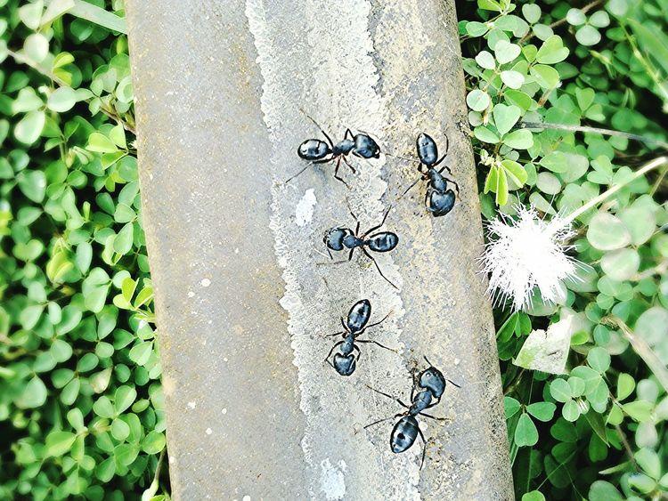Ant Railway Track