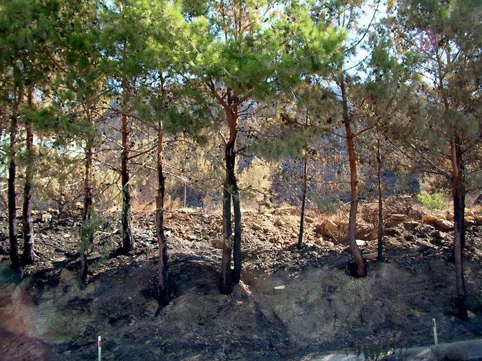 070719 Bozyazı Forest Forestfire Galpay Nature Ormanyangını Tree