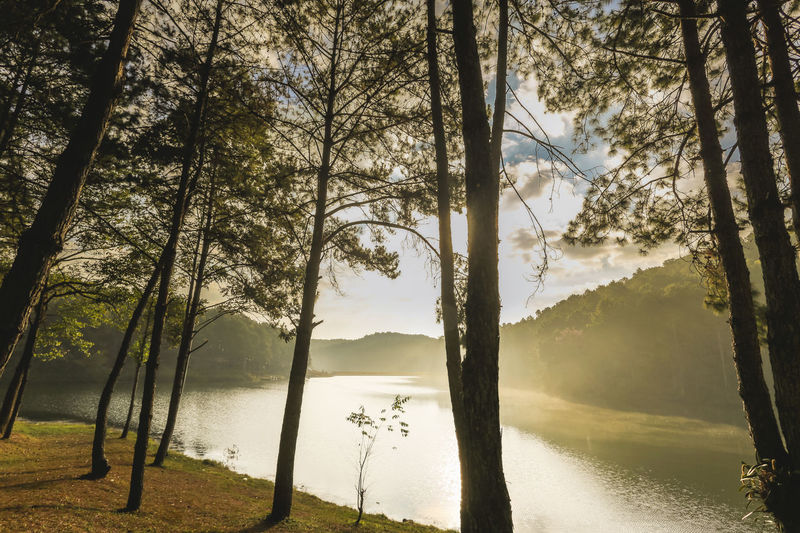 Scenic view of lake against trees in forest
