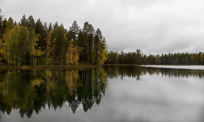 Atumn Colors Lapland Sweden Atumn Atumn Leaves Atumn Photograhy Beauty In Nature Day Forest Jokkmokk Lake Lapland Sweden Nature No People Norrbotten Sweden Outdoors Reflection Scenics Sky Sweden Nature Sweden-landscape Tranquil Scene Tranquility Tree Water