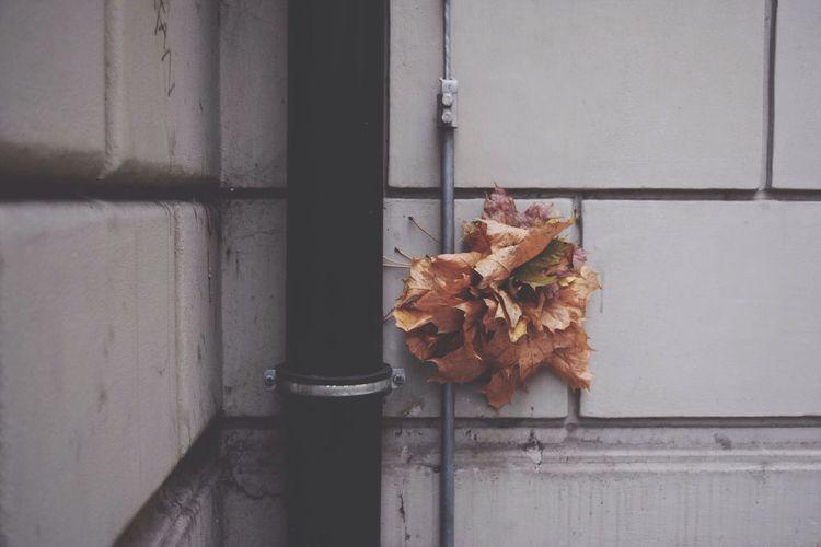 sammlung Autumn Leaves Elegance Everywhere