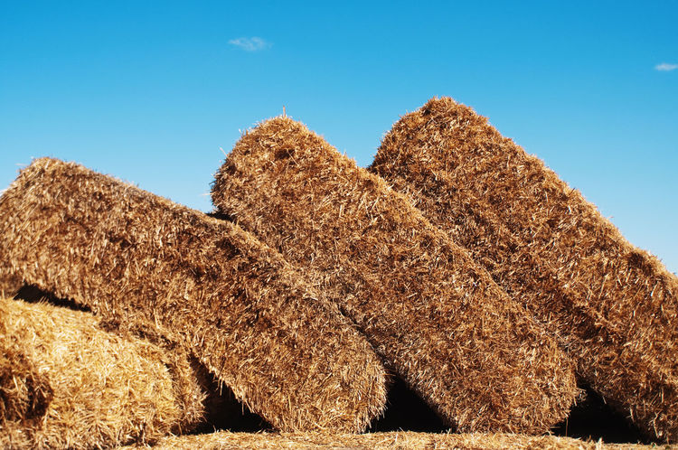 Farm Stack Sky Farm Life Thatch Stacked Up Straw Daylight Countryside Outdoors Day Stacked Piled Up Pile Of Straw Bale  Blue Sky Blue Yellow Yellow Color 43 Golden Moments