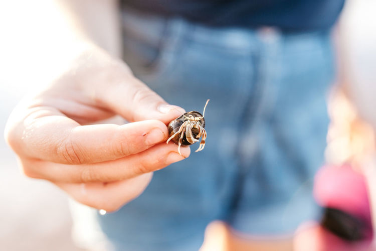 Midsection of man holding hermit crab