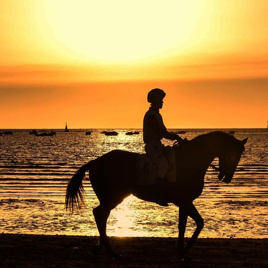 Side view of horse racer on beach at sunset