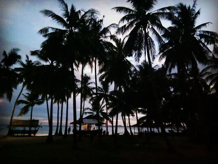 """""""This part of my life, this liitle part is called Happiness"""" Kickassmonti Eyeem Philippines Palm Tree Vacations Travel Sea Beautifull Destinations Backpacking Travel Outdoors"""