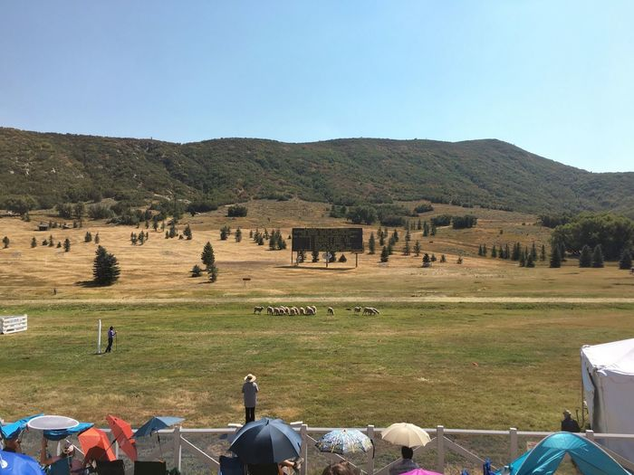 today we checked out the Soldier Hollow Classic Sheepdog Championship. super fun & fascinating. Dogsaremyfavoritepeople Soldier Hollow Utah Midway, Utah