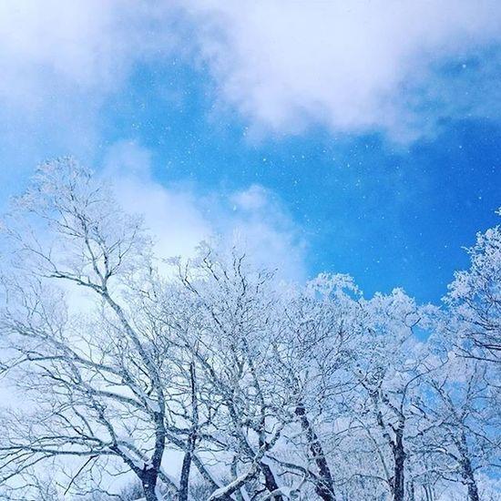 トマム 星野リゾートトマム 霧氷 霧氷テラス 空 イマソラ 青空 雪