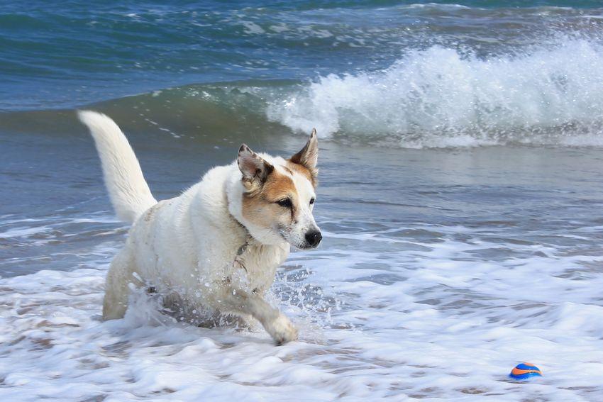 Sasha - seadog Outdoors Dog Photography