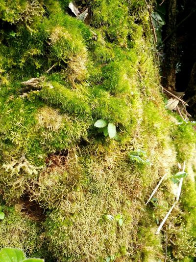 Moss macro Nature No People Outdoors Day Green Color Growth Close-upEyeEmNewHere Mossy Forest Power Of Nature Personal Perspective Moss Close Up Branch Sunlight Forest Wood - Material Beauty In Nature Nature Photography Silhouette Tranquility Backgrounds Plant Beauty In Nature Water Tourism Malaysia