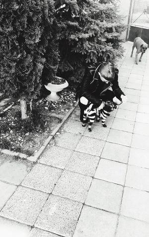 Zebra Pattern Pug Outdoors Animal Love