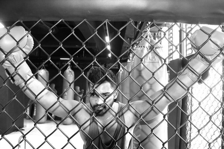 Boxer seen through chainlink fence