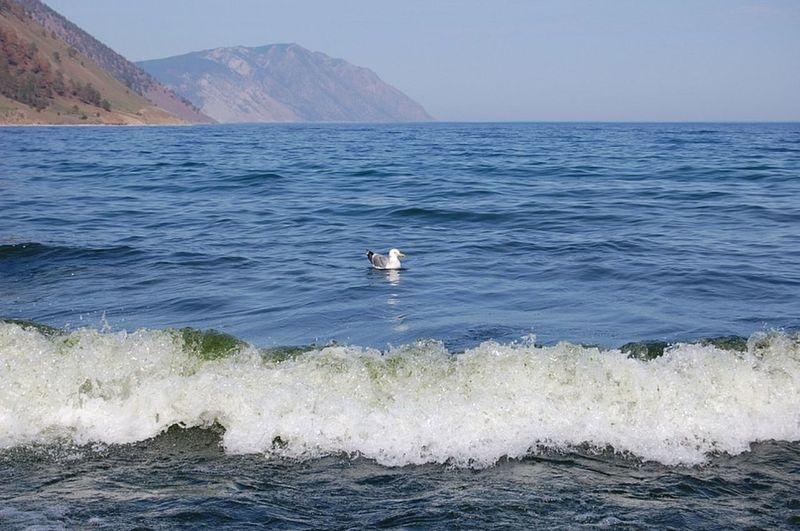 Baikal Russia Beauty In Nature Seagull Baikal Olhon Russia