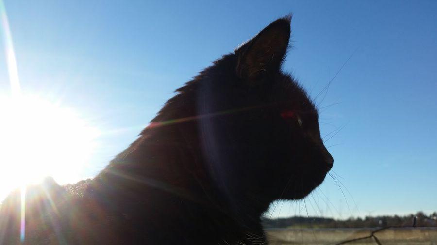 Black Cats Katzen 💜 Cats 🐱