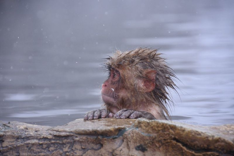 View of a monkey against the lake