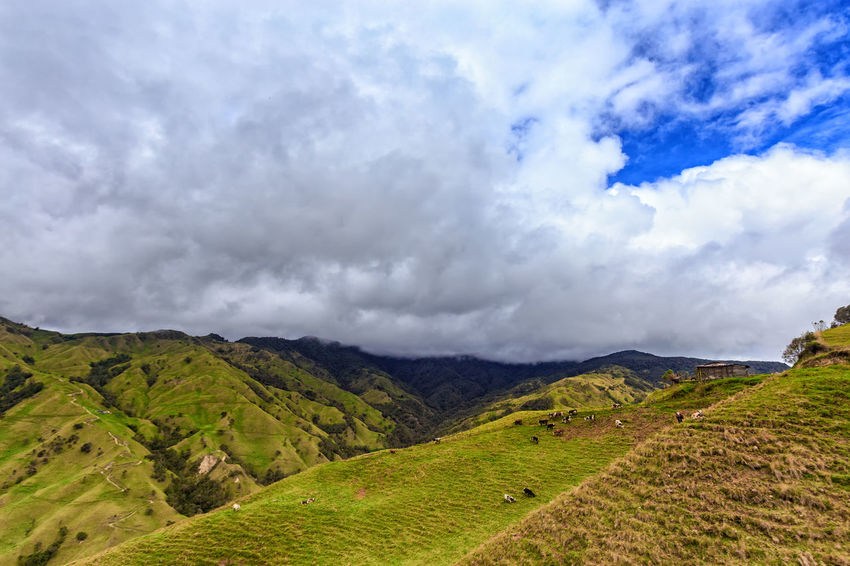 Grey clouds over green pasture land in the mountains outside of Salento, Colombia. Cloud Colombia Farm Hiking Palm Pasture Quindío Rural Tree Trip Andean Cauca Colombian  Countryside Day Forest Hike Jeep Landscape Outdoors Quindío Salento Tolima Trek Wax