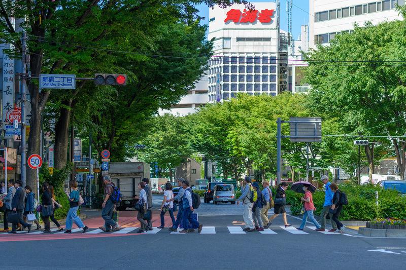Crosswalk Japan Shinjuku Tokyo City City Life Plant Road Street Tree 新宿二丁目 東京 横断歩道 First Eyeem Photo