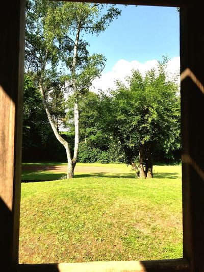 Nature Window Windowportrait Outofwindow Playground Plant Tree Nature Day Sky Growth Sunlight Outdoors No People Grass