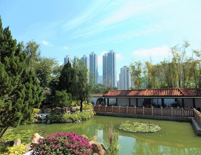 Blue Sky Flowers Garden Lake North Garden Park Plants Sha Tin Tall Buildings Urban Park Water Hong Kong Chinese Garden Adapted To The City