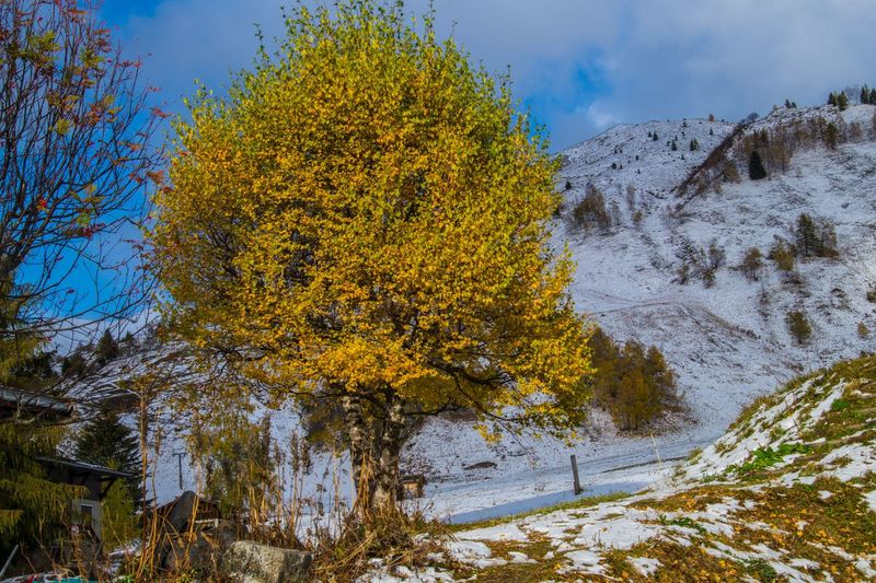 le tour,chamonix,haute savoie,france Tree Winter Plant Cold Temperature Beauty In Nature Snow Scenics - Nature Tranquility Sky Nature No People Tranquil Scene Autumn Day Land Non-urban Scene Environment Landscape Cloud - Sky Outdoors Change Snowcapped Mountain
