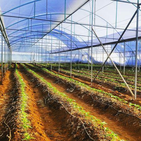 Agronomia Agronomy