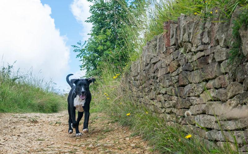 Dog Dogslife Dog Walking Doglife Puppy Puppydog Puppylife Puppy Love Puppy Dog Puppyoftheday Puppy Dogoftheday Dogs Of EyeEm