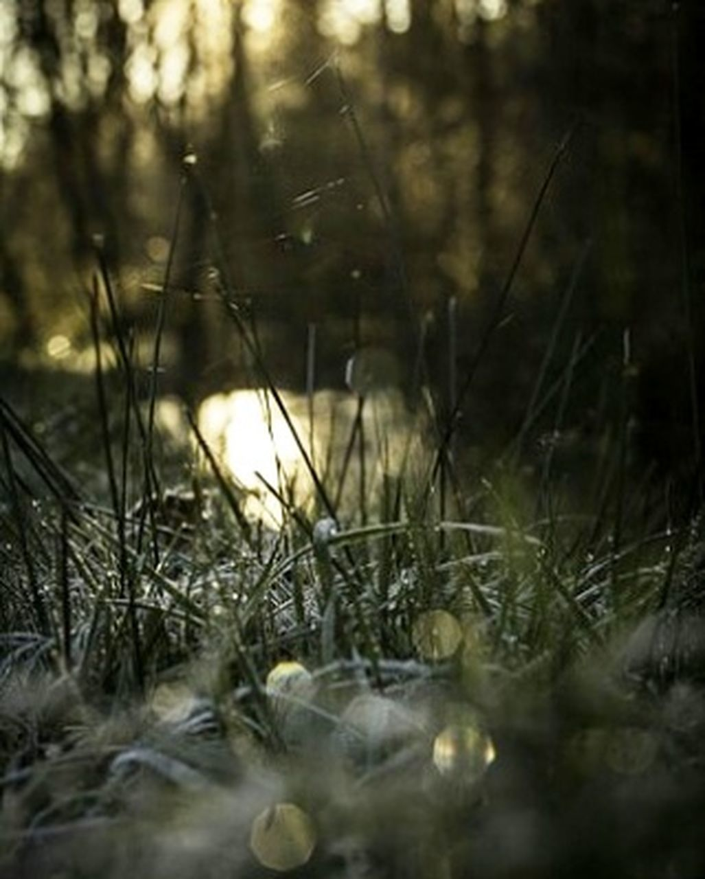 winter, nature, cold temperature, no people, plant, outdoors, snow, day, forest, snowflake, close-up, tree, freshness