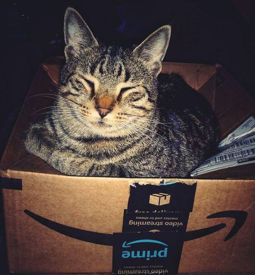 Cats Of EyeEm Box Shipping  Ififitsisits Kitty Tabby Cat Domestic Cat Pets Domestic Animals Feline One Animal Animal Themes Mammal