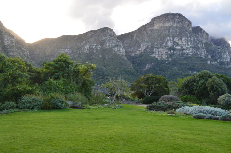 Kirstenbosch National Botanical Garden Beauty In Nature Cloud Cloud - Sky Cloudy Day Grass Green Color Growth Hill Idyllic Kirstenbosch Kirstenbosch National Botanical Garden Landscape Mountain Mountain Range Nature No People Non-urban Scene Outdoors Rock - Object Rock Formation Scenics Sky Tranquil Scene Tree