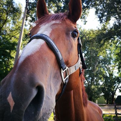 Tree Brown Horse Close-up Horseback Riding