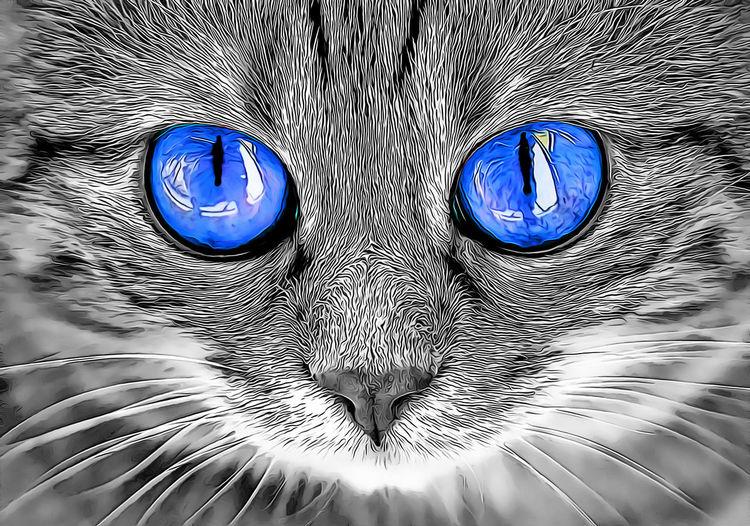 Animal Animal Themes Blue Cat One Animal Mammal Close-up Eye Vertebrate Domestic Cat Pets Animal Body Part Domestic Domestic Animals No People Looking At Camera Feline Indoors  Animal Eye Animal Head  Whisker Cartoon