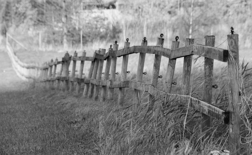 Blackandwhite Fence vanishing point Sweden Sky Grass Wooden Post Farmland Field Growing