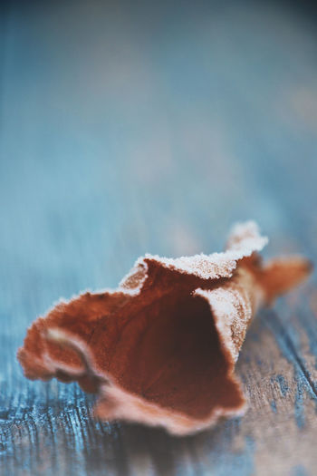 Winter Icy Close-up Freshness Still Life Selective Focus Copy Space Table Single Object Simplicity Blue Background Purity Wood - Material Leaf Autumn Ice Icecold Cold Temperature Cold Frosty Frosty Mornings Nature Beauty In Nature Art In Nature Nature Art