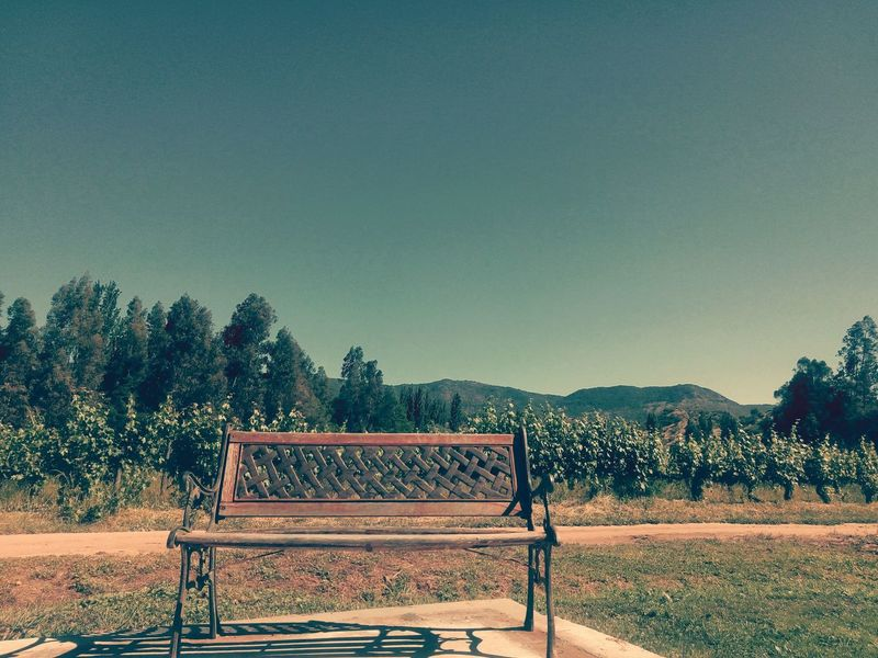 Tree Sky Day Nature No People Outdoors Vineyard Colchagua Viña Escondida Southamerica Chile Viña Beauty In Nature Vacations Holidays Summer Landscaping The Week On EyeEm Landscape_photography Landscape Beautiful ♥ Bank Vintage Vine - Plant Relaxing