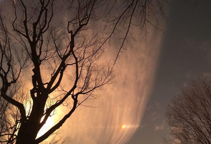 Cloud tree sundog sunpuppy Beauty In Nature Winter Bare Trees Sky Art Nature Sun Dog Sundog Break The Mold