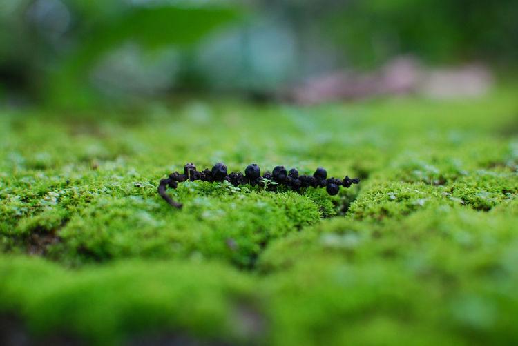 Black Pepper Beauty In Nature Grass Green Color Nature Outdoors Selective Focus Tilt-shift