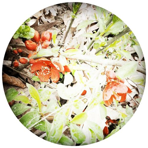TreePorn Frame It! EyeEm Best Shots Flowers