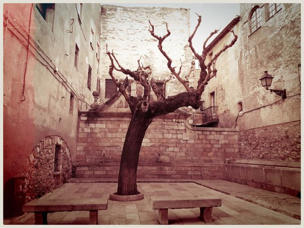 Old and lonely. Mobilephotography Samsungphotography A5 Old Places Lofiphotography Streetphotography Explorer Decay Stonewall Tree Monochromatic Monochrome World Kultcamera Blackandwhite Black And White Friday Ancient