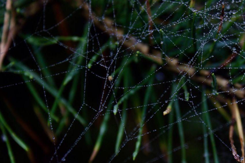 Spider Web Nature Fragility Water Freshness EyeEmNewHere