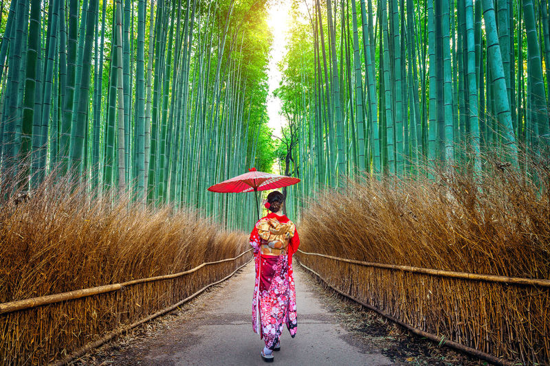 Rear View Of Woman With Umbrella Walking Amidst Bamboo Groves