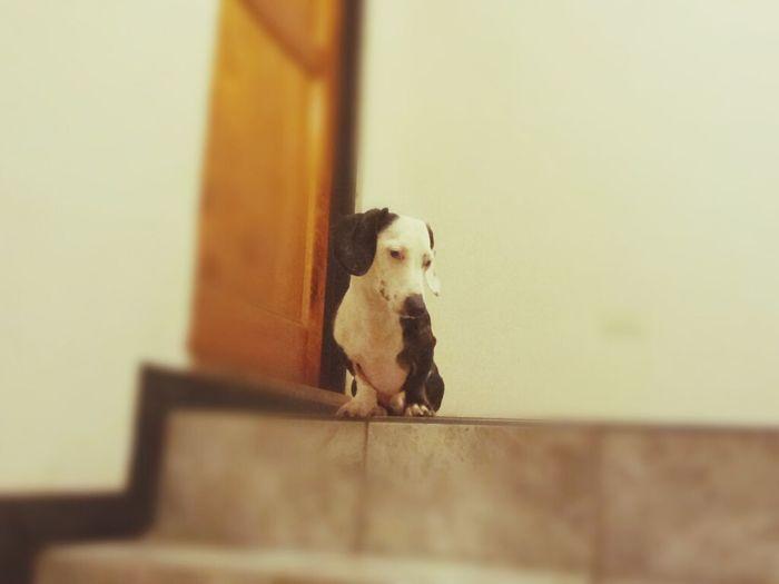 My Dog Is Cooler Than Your Kid. Ilovemydachshunds I Love My Dog Dachshundlove