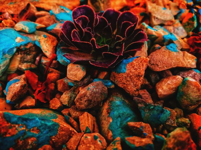Full frame shot of rocks on field