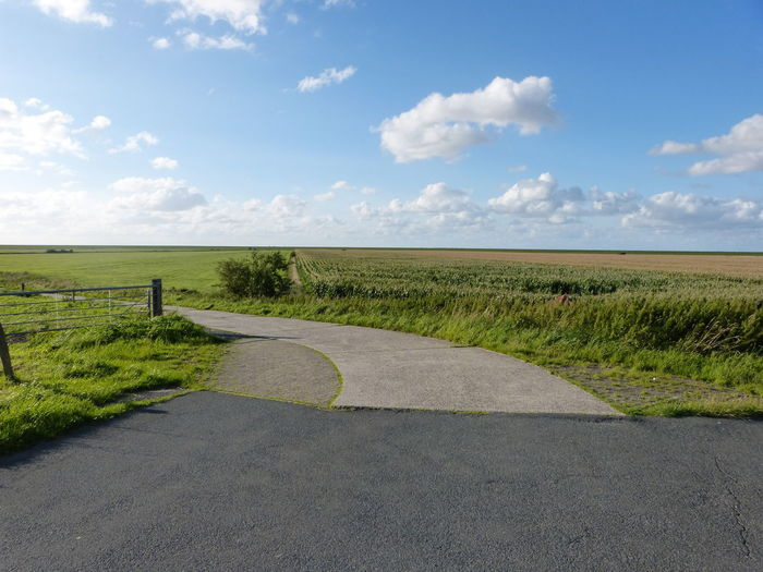 Dikeroad view - Deichstraßen - Blick - in Ostfriesland - North Sea - Nordsee .. :-) - Deich  Deichstraße Nature Nordsee Feeling🐚🌾 Nordsee... North Sea Coast North Sea Region Ostfriesland Ostfriesland Kultur Ostfriesland Landschaft Summertime Day Dike Diken Dikeroad Landscape No People Nordsee Nordseeküste North Sea Northsea Northsea Coast Outdoors Scene Summer